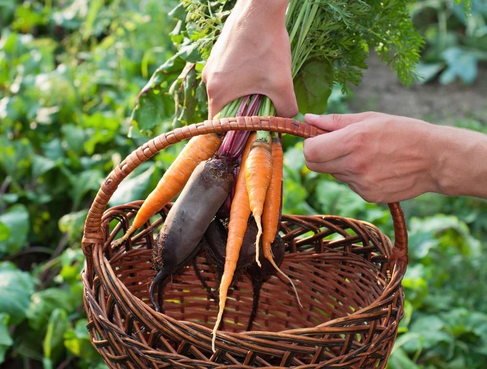verduras ¿Sabéis la diferencia entre hortaliza y verdura?